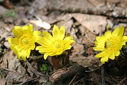 可愛らしいきれいな花です