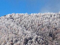 菅平高原の初雪、山の木々もすっかり雪化粧