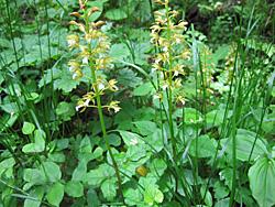 黄色い花の色が林の中では目立つ